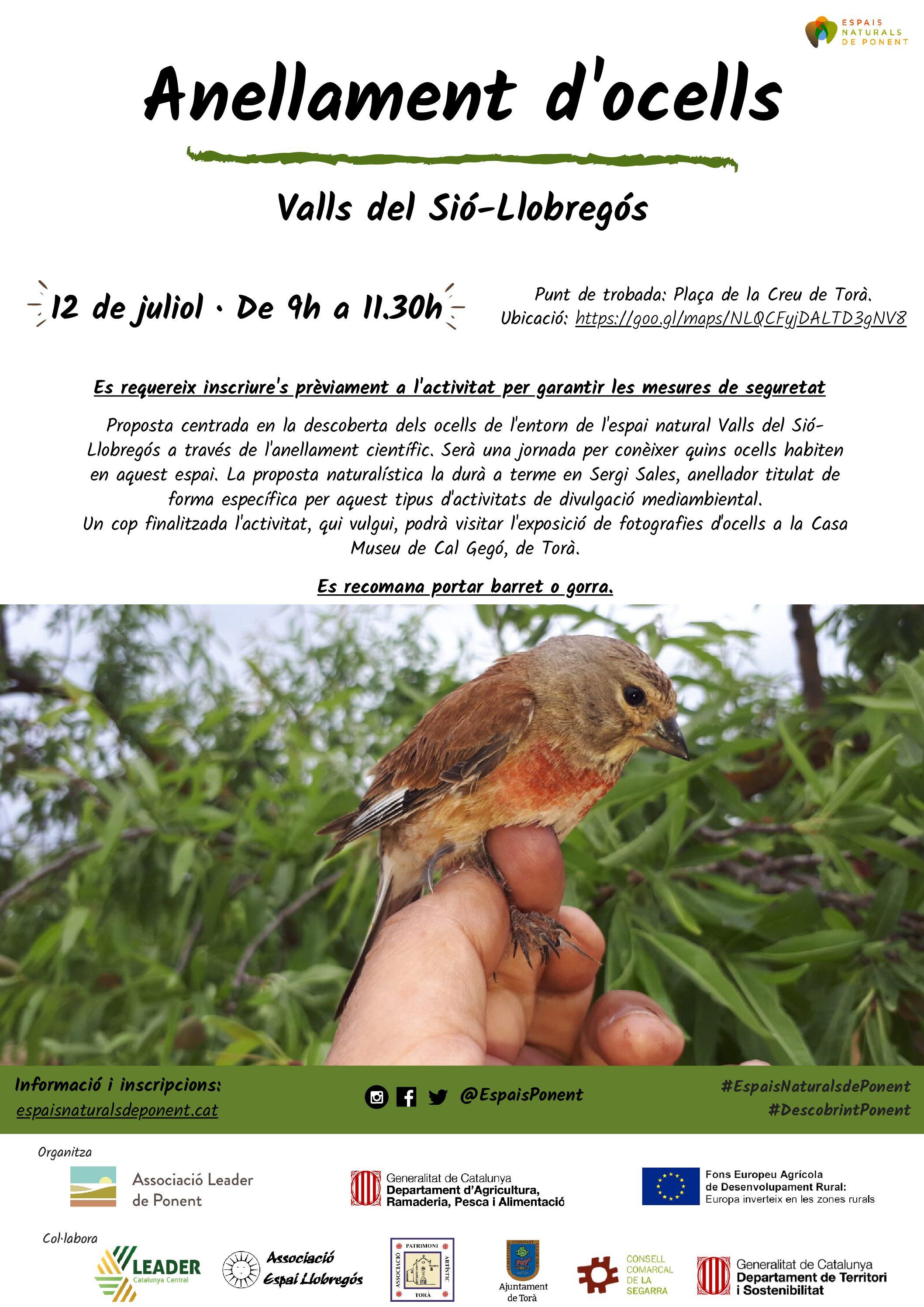 Anellament d'ocells a Torà. Dia 12 de juliol