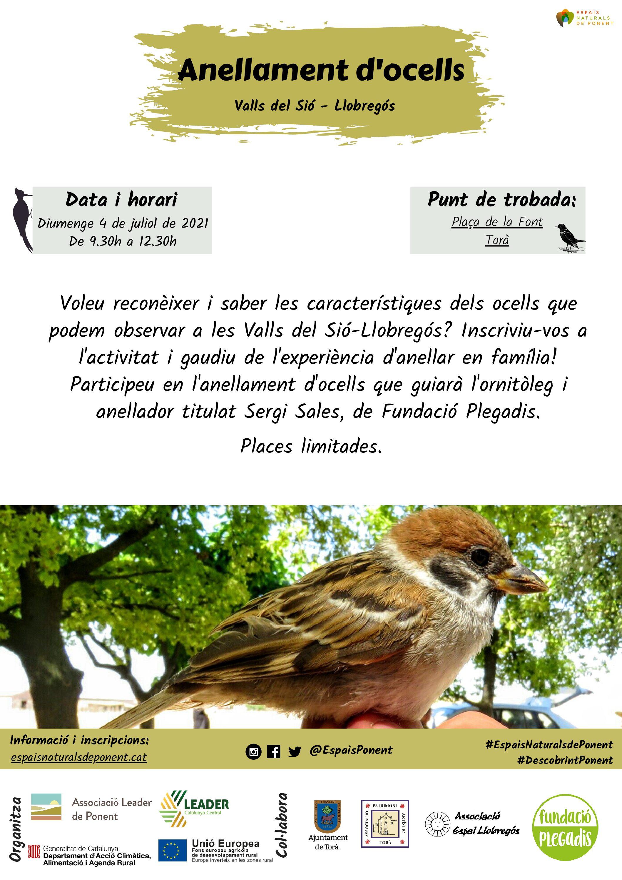 Anellament d'ocells a Torà- (Espai Valls de Sió-Llobregós)